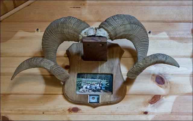 Trophy Ram