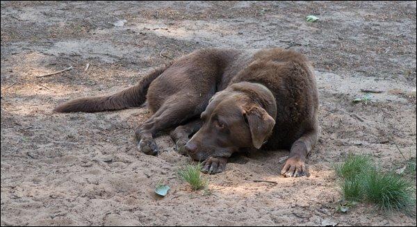 Tired Pooch