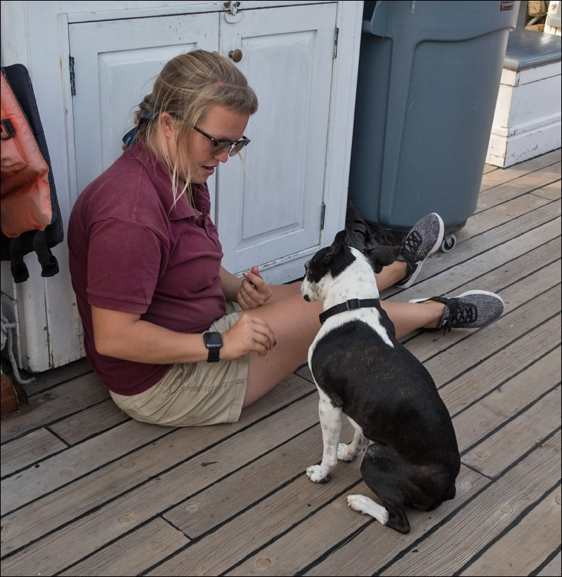 Canine Companion on Board S/V Denis Sullivan
