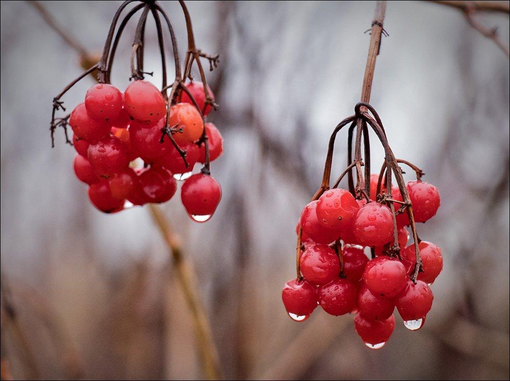 Winter Berries, Freshly Washed